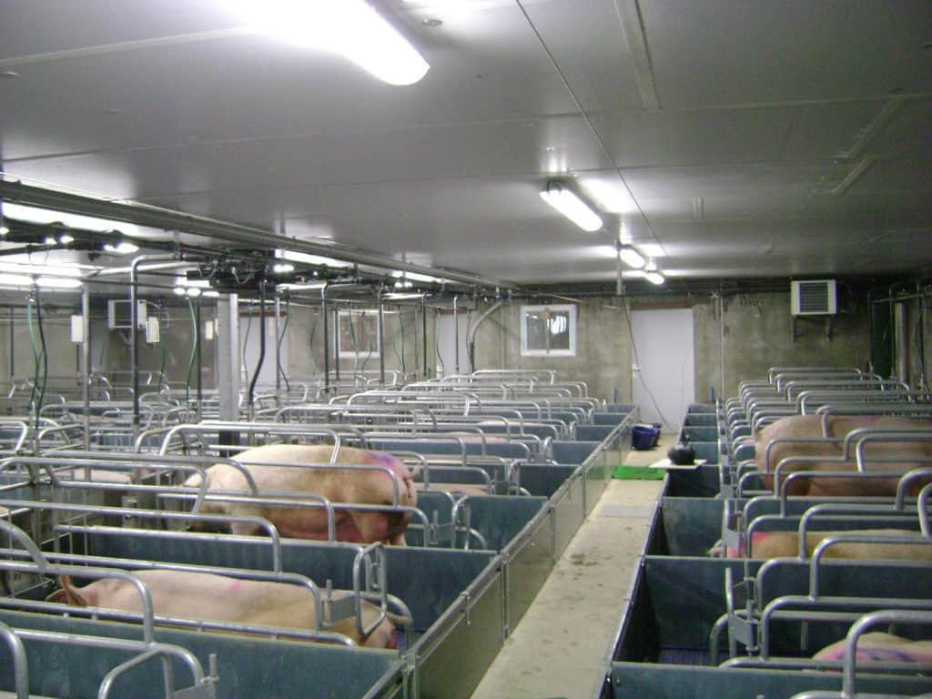 Chauffage aérothermie - élevage - Asserva énergies
